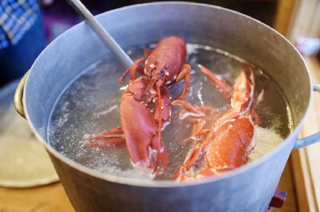 I 10 migliori consigli per cucinare l\'aragosta fresca ...